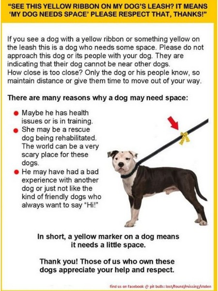 Maggie's Journal :: Yellow Ribbon Dog Needs Space Message